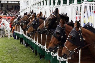 Horses in Gate