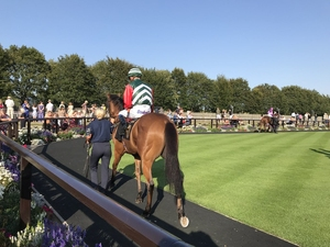Horse in Parade Ring
