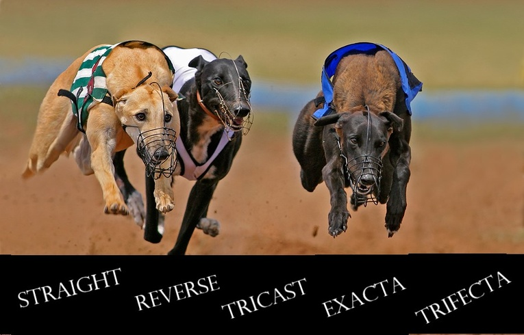 Greyhound Forecast Betting