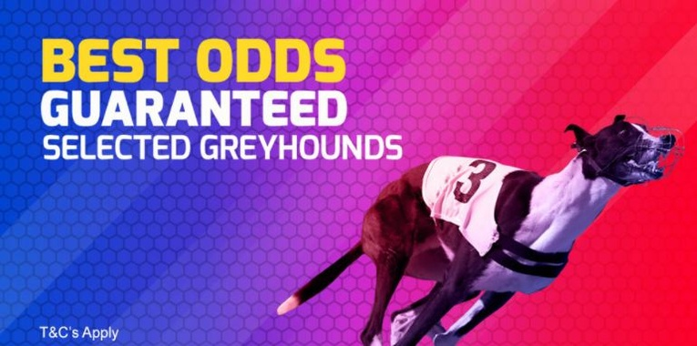 Greyhounds Best Odds Guaranteed